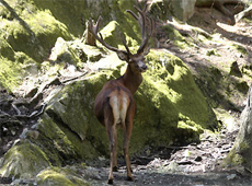 Picture of      Red Deer